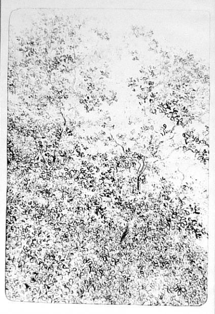 Midi entre les feuilles